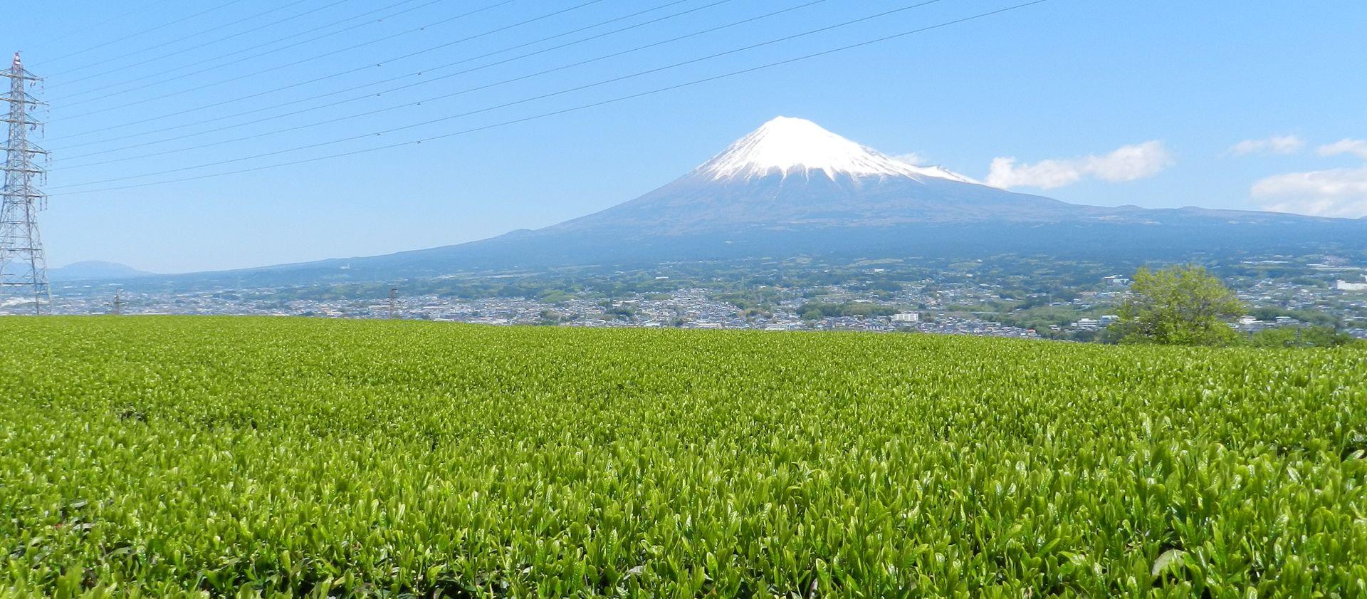 静岡県富士宮産 新茶 飲み比べセット 特選やぶきた茶&特選かぶせ茶